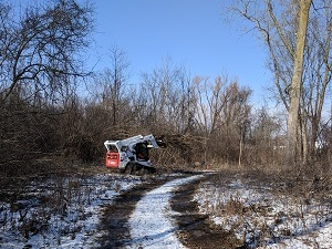 Pic-Rotary-Buckthorn