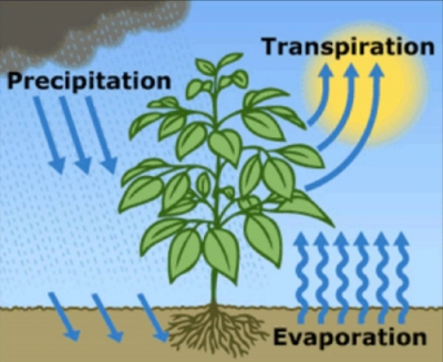 Transpiration diagram