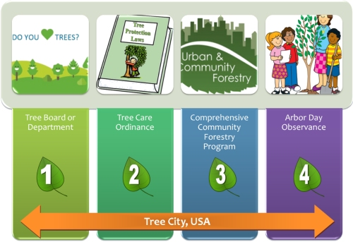 Graphic showing the four standards to become a Tree City USA noted in bullet points above