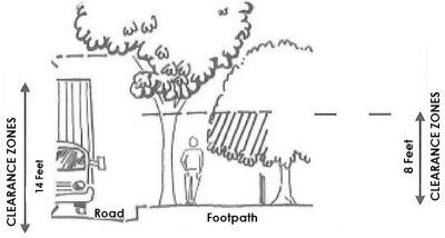Diagram showing tree clearance zone of 8ft for a Footpath and 14 feet for a Road