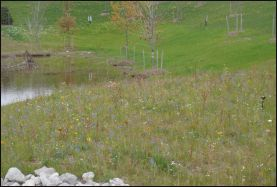 View of Storm water control basin with wildflowers growing around it